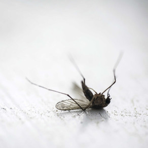 «Es ist unverantwortlich, ein konkretes Datum für eine Malaria-Ausrottung zu nennen»