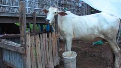Pastorícia