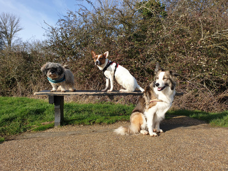 Group dog walks
