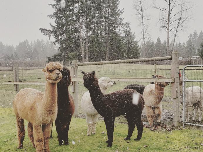 First snowfall on the farm