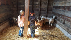 Sheep & Shepherds of Seek First Ranch