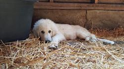 Guard Puppy of Seek First Ranch