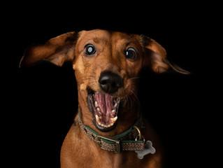 Unique dog portraits