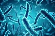 bacteria .jpeg