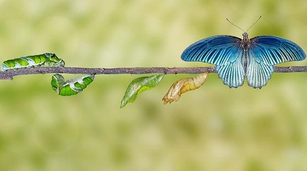 Chenille et papillon.jpg