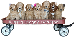 About Us Ruffn Ready Doodles Canada