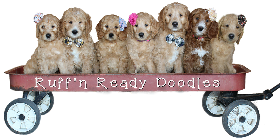 Pups in wagon group meshed photos 2 -- a