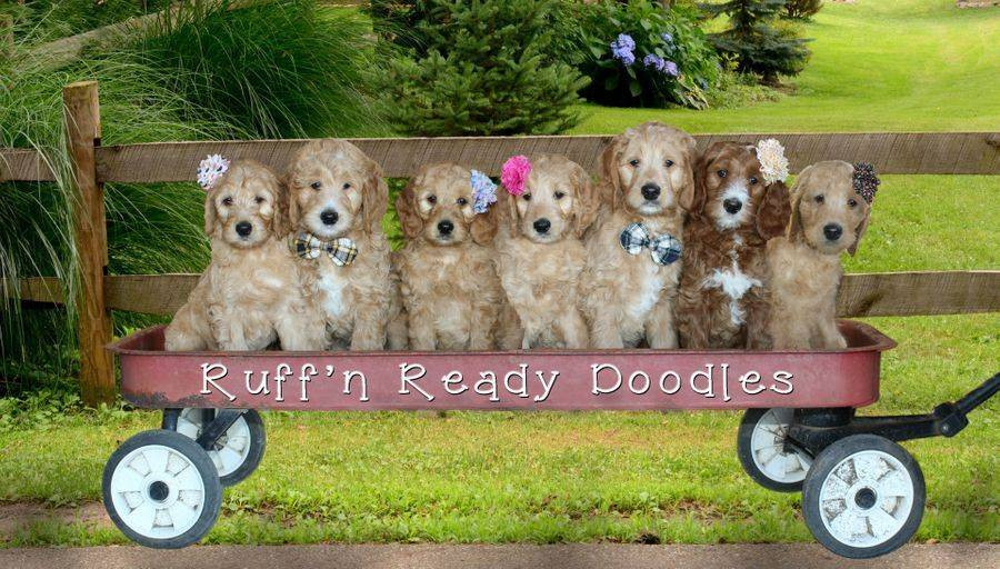About Us | Ruff'n Ready Doodles | Canada