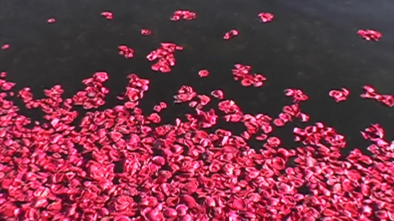 Quassy_red_rose_petals.mp4