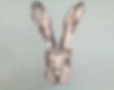 hare image landscape.png