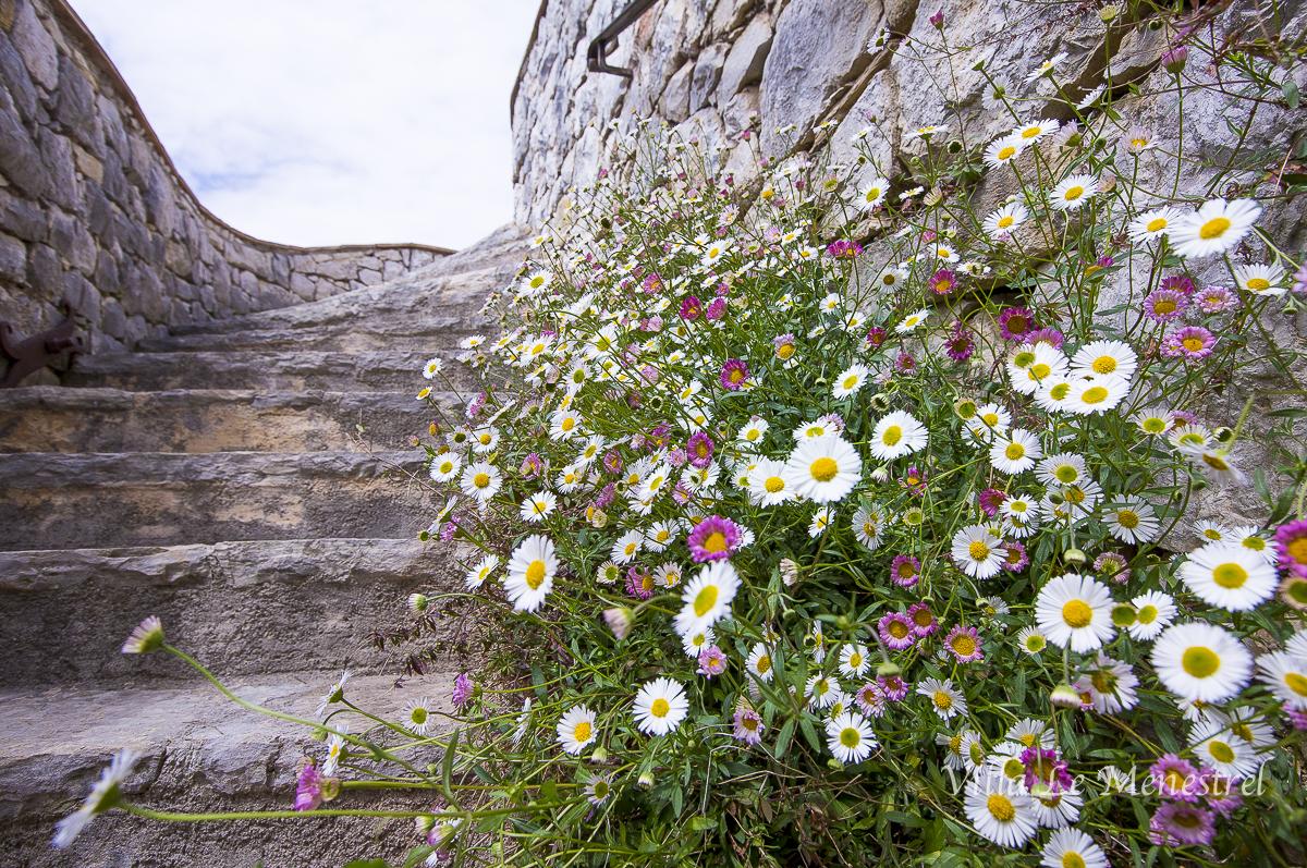 Kukkivat portaat