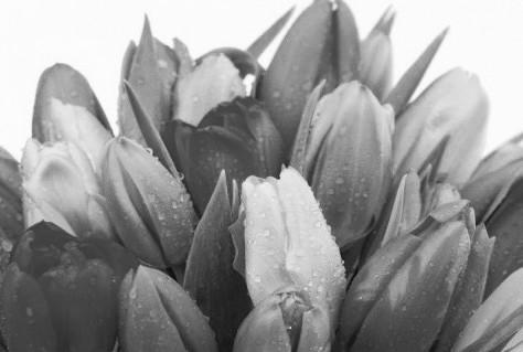 Goed half jaar voor Nederlandse bloemenwinkels: meer omzet en winst voor bloemist