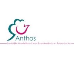 anthos 300x300 new