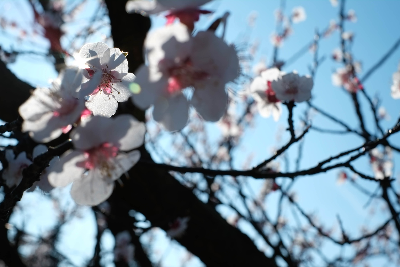 Arjun Roodink Blossom-5