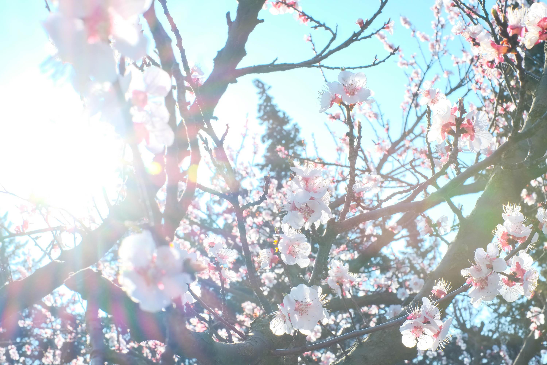 Arjun Roodink Blossom-1