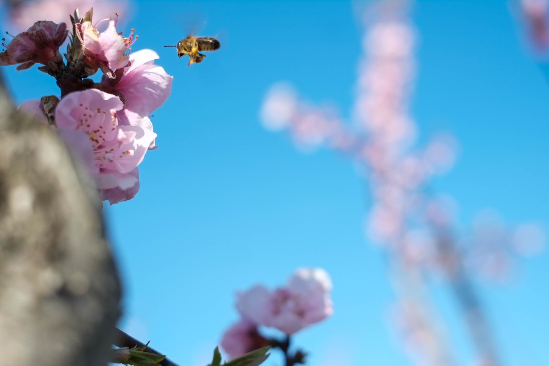 Arjun Roodink Blossom-2