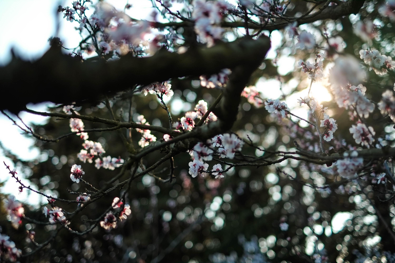 Arjun Roodink Blossom-7