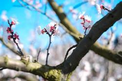 Arjun Roodink Blossom-3