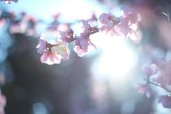Arjun Roodink Blossom-9