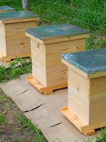 Beehives growing