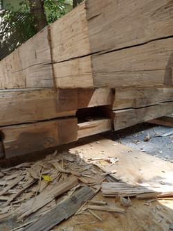 Elm Timbers