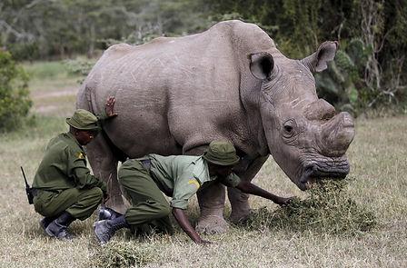 Sudan Last White Rhino.jpg