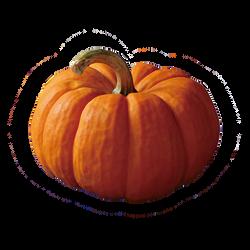 Pumpkin Noodle 金瓜麵