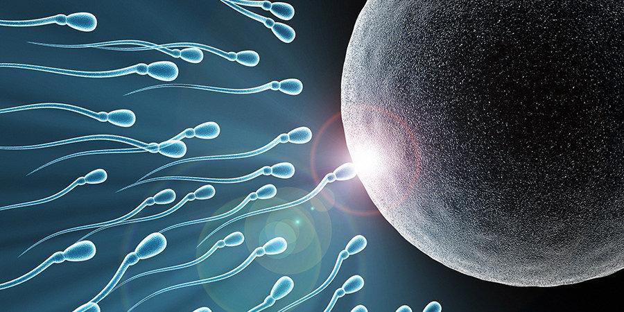 inseminazione.jpg
