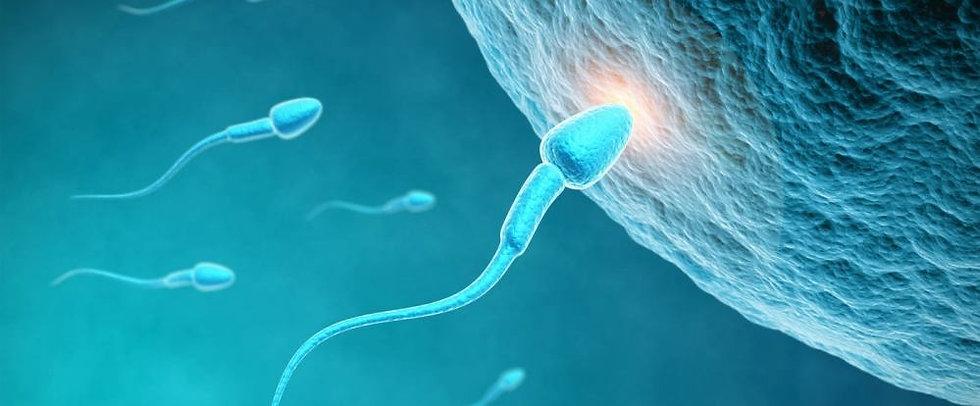 ovulazione-come-funziona-1000-414.jpg