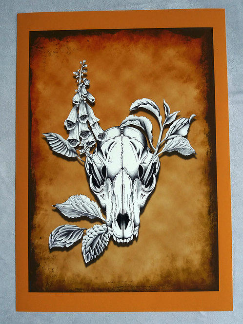 A3 print Fox Skull -  Coloured