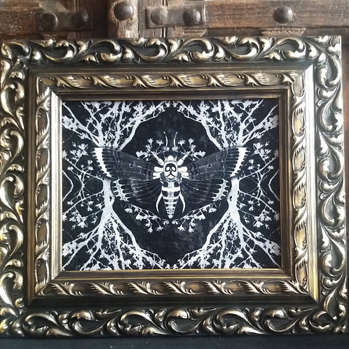 Framed Velvet fabric Art print - Ghost moth - Black