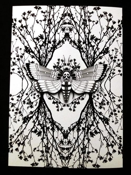 A3, A4 or A5- Ghost Moth - White Art Print