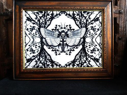 large Framed Velvet Print - Ghost Moth - white