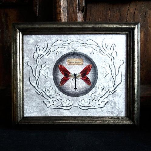 Framed Bayeux Velvet fabric print - Tulip Moth