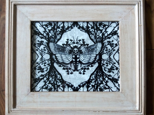 Framed Velvet Print - Ghost moth - white