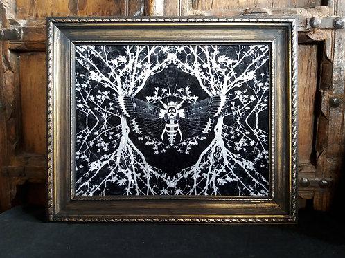 Framed Velvet Print - Ghost Moth Black