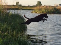 Duke Jumping.JPG
