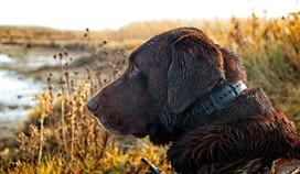 Duke hunting.jpg