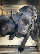 Boo and Deke Pups.jpg