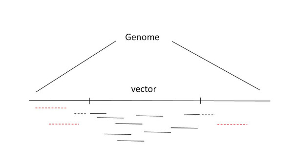 Identify vector integration site in a efficient way