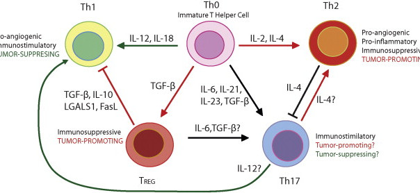 A glance into tumor                                   microenvironment