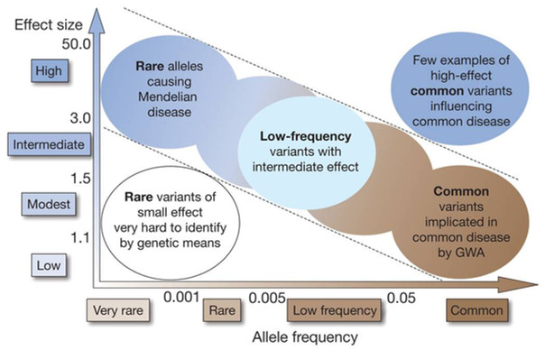 Variant frequency, effect size and GWAS limitation
