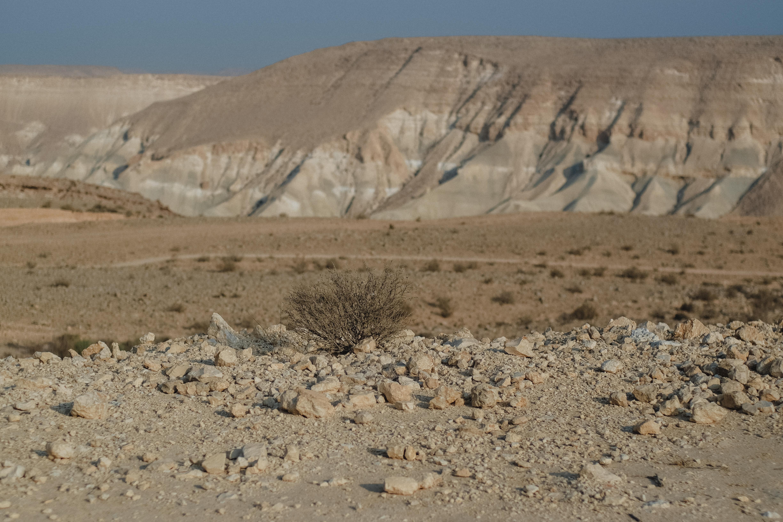 Desert stroll - Photo by Shady Ablas