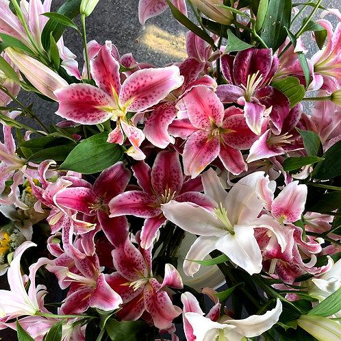 Star Gazer Lily Bouquet