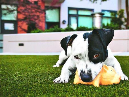 Direitos e deveres para quem tem animais de estimação no condomínio