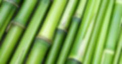 bamboo-large.jpg