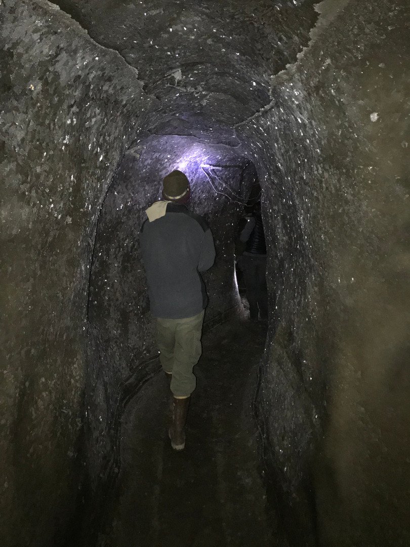 Permafrost Tunnel at Pleistocene Park