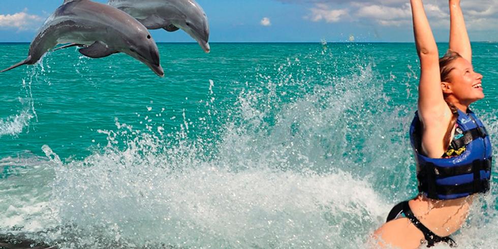 Dolphin Explorer US$149.00