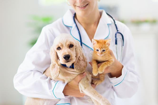 熊本動物病院のペットの治療犬と猫