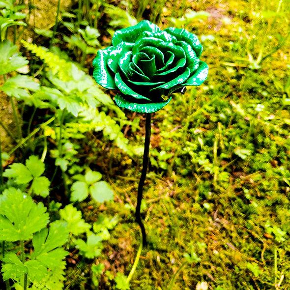 Rose for Paesha